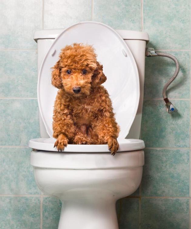 狗狗冼澡都去不出的臭味,很可能源于它的这4个地区