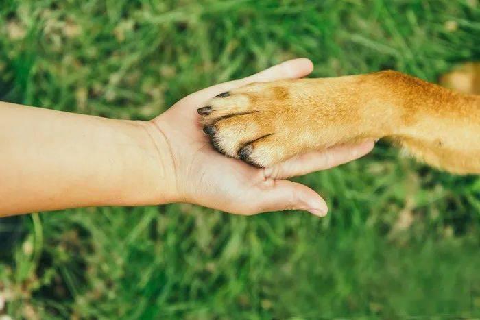 夏天狗狗这一部位的毛务必剃,由于能帮狗狗散热
