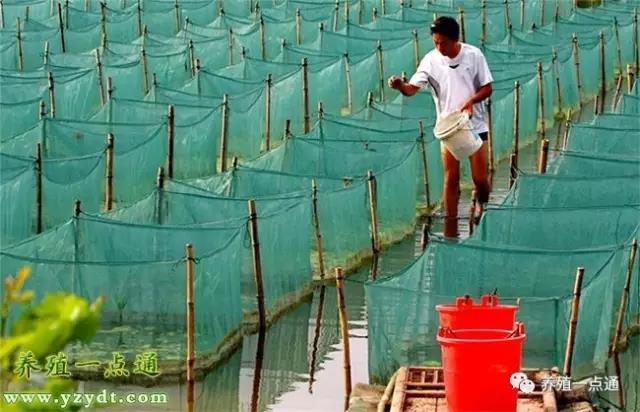 【黄鳝养殖】黄鳝小池高密度养殖技术