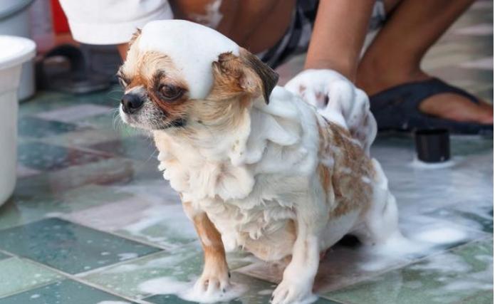 家里有小狗的注意了,下列清理关键点没搞好,小心小狗人体不健康