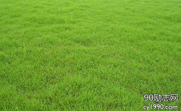 草坪全年都可种植,带农民走致富新路子