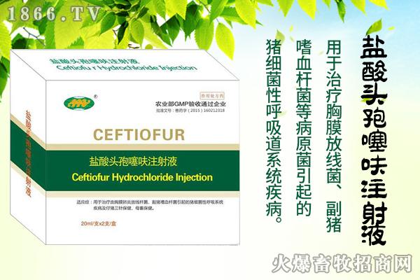 盐酸头孢噻呋注射液——治疗猪各种细菌感染,效果好,口碑好!
