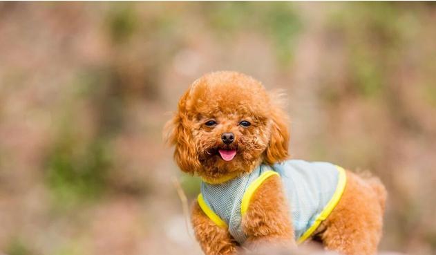 """狗狗一直害怕去""""��物店""""?有�@五���故"""