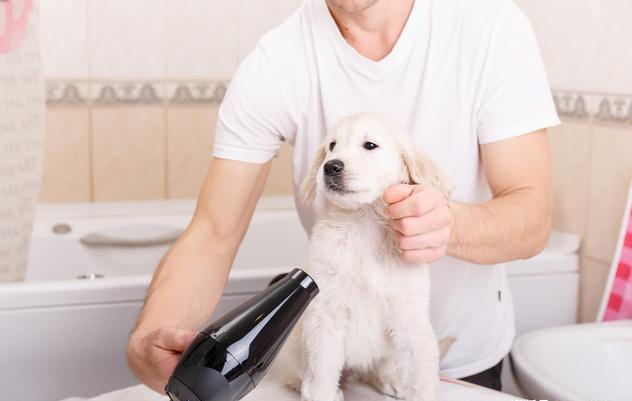 五个给狗狗冼澡的流程,你都保证位了没有?