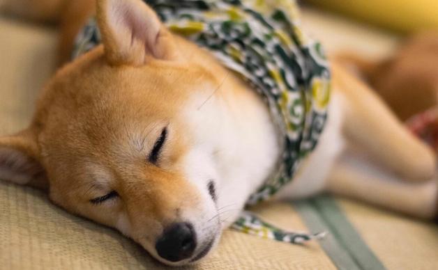 你的狗狗确实必须补钙吗?补钙产能过剩也是有风险的