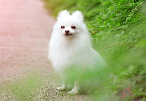 狗吃了人的美白牙膏��死�幔抗烦匝栏��怎么�樱�