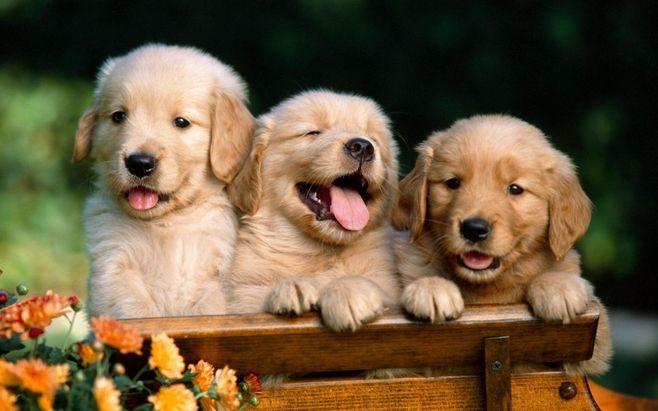 小狗能一直喝小狗奶粉�幔啃」纺谭�3大益�你不可不知道!