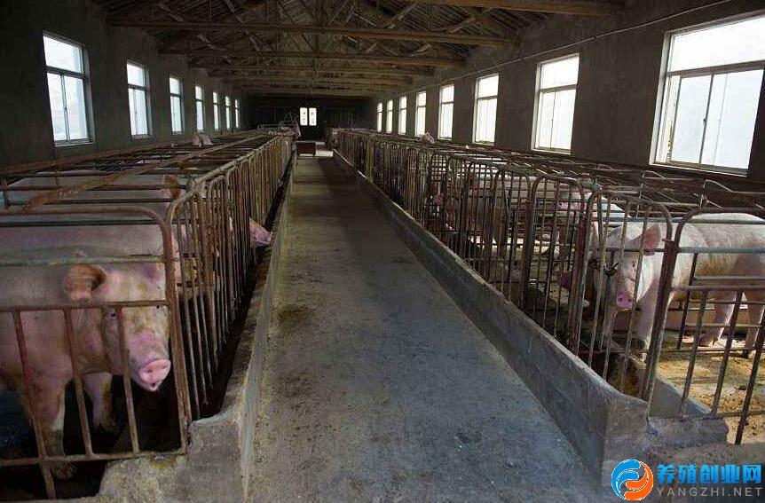 安徽鹌鹑养殖基地