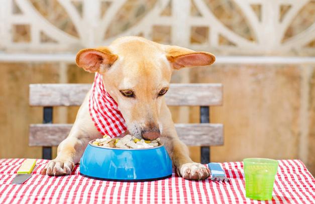 狗狗的喂食�e�`�^念,你仍在那�游梗慨�心它活不�L期