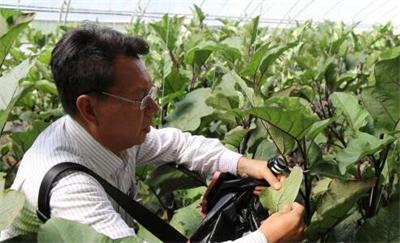 农业专家为西藏武警种植蔬菜提供技术支持