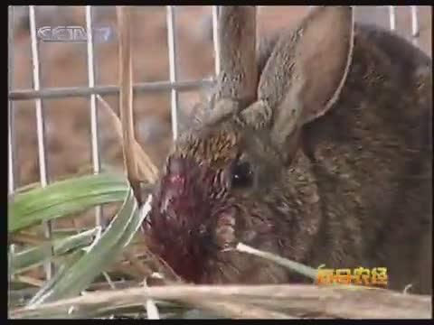 内蒙古野兔养殖