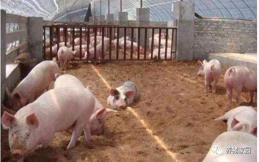 2021年春节前后猪价预测!