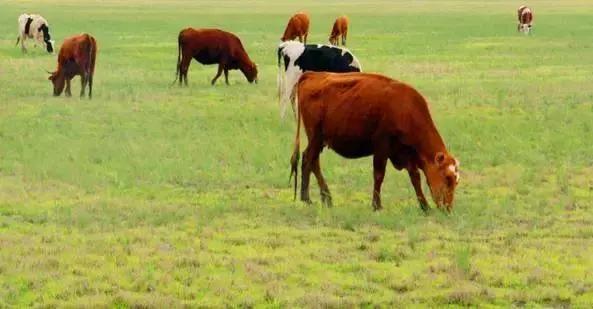 内蒙古能养殖马蜂么