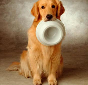 金毛狗那样养会很身心健康的