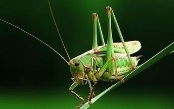 广东养殖什么昆虫赚钱