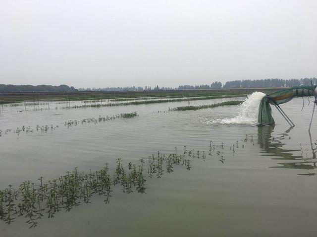 湖北螃蟹养殖基地 螃蟹产地是在哪里