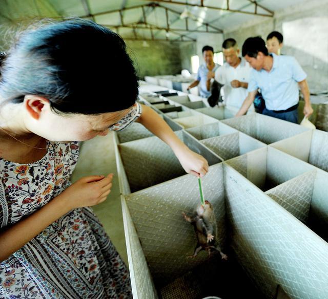 湖南有养殖竹鼠 湖南哪里有竹鼠种苗卖