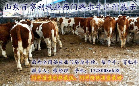 湖南红鲫鱼养殖场