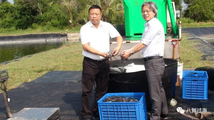 广东养殖虾种类