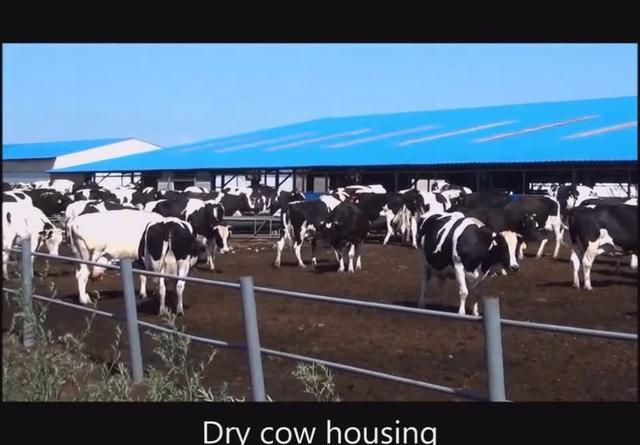 佛山奶牛养殖场 奶牛养殖合作社