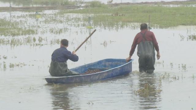 成都 小龙虾养殖
