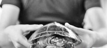 广东茂名龟鳖养殖场