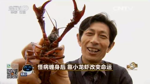 安徽小龙虾养殖 安徽养殖小龙虾基地