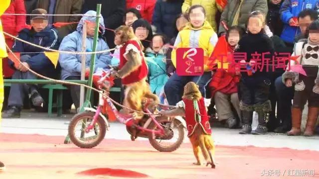 河南猕猴养殖场 河南什么地方有卖猴子