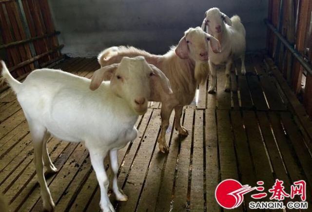 河南牛羊养殖场合作社