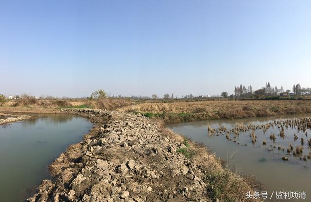 湖北仙桃市小龙虾养殖