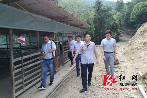 湖南永州黄牛养殖基地