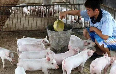 千头母猪场流传:母猪配种技术记录!(值得收藏)