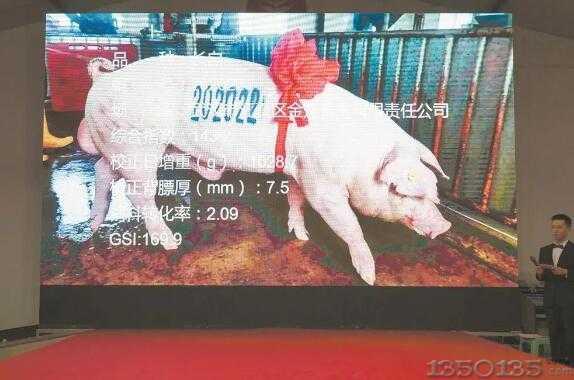 """4.2万元!湖北今年""""猪王""""诞生"""