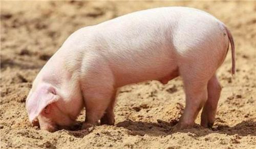 河南郑州:猪肉批发价多个单品每公斤不足40元