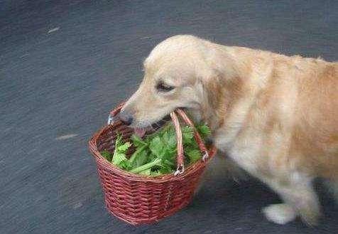 ��狗狗�W��送�|西
