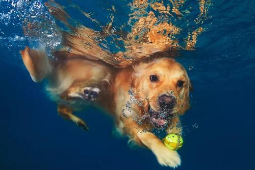 如何��狗狗游泳