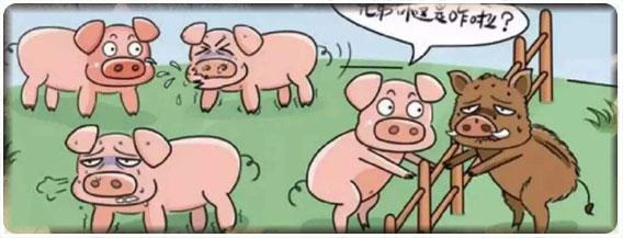 右旋糖酐铁对猪异食癖有作用吗