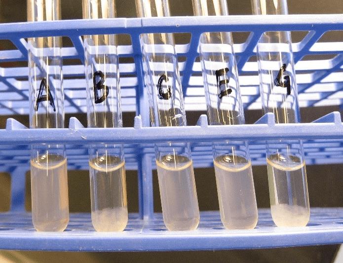 详解 | 谈禽沙门氏菌的分类、命名及常见误区