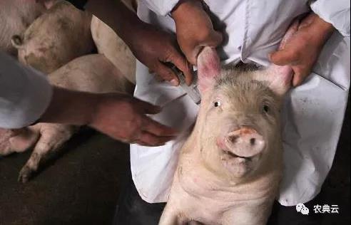兽用疫苗的接种基本原则、接种方法、使用前准备等