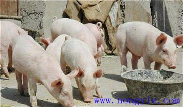 猪拉稀是什么原因造成的 用什么药治疗 怎样治疗
