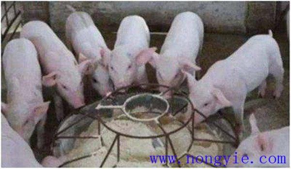猪营养性腹泻症状表现 猪营养性腹泻怎么治疗