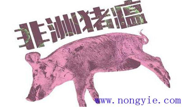非洲猪瘟什么症状 非洲猪瘟的防控措施、要点