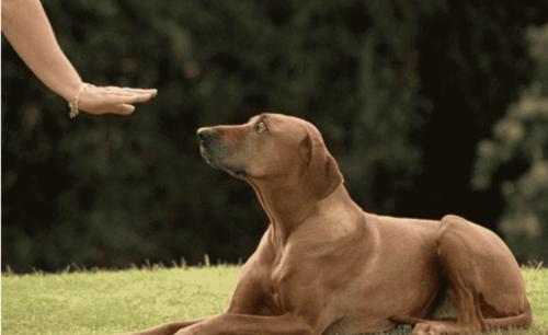 狗狗的良好习惯怎么训练,训练狗狗的方法