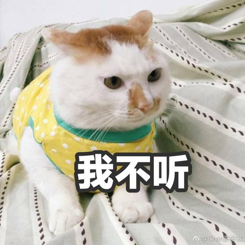 如何训练猫过来,怎么让猫过来