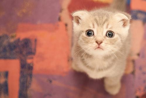 如何训练猫看,训练猫坐下的方法