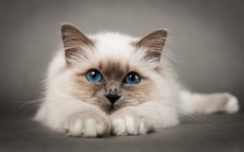 如何训练猫趴下,训练猫不要动的方法