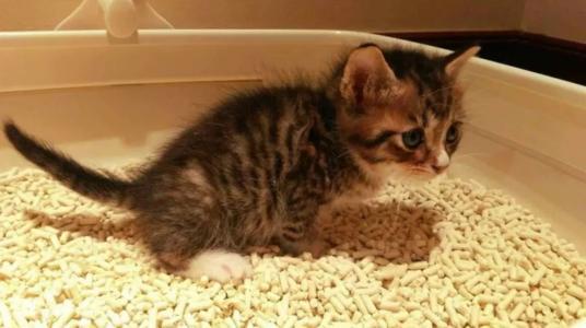 如何训练猫使用猫砂,训练猫使用猫砂的方法