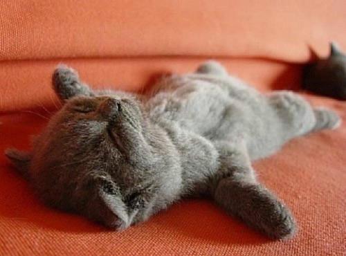 如何训练猫装死,训练猫装死的方法