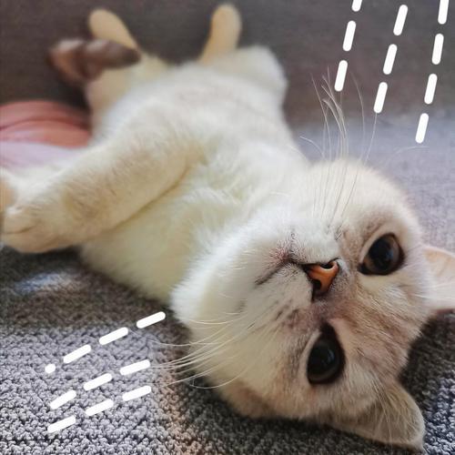 如何训练猫打滚,训练猫亲吻的方法
