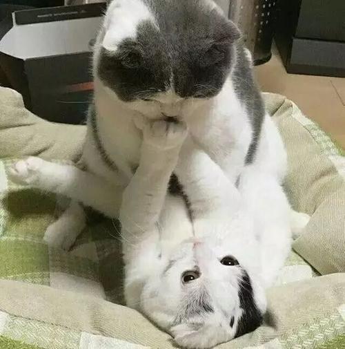 公猫和母猫节育手术有什么区别,猫咪节育手术介绍